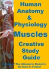 Human Anatomy  Physiology Muscles