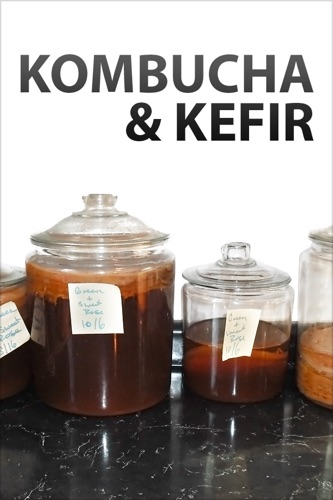 Authors and Editors of Instructables - Kombucha and Kefir