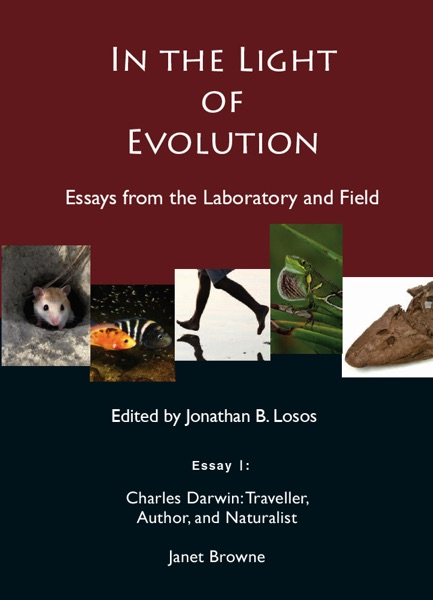 evolution essays Essay on evolution there are many mechanisms that lead to evolutionary change one of the most important mechanism in evolution is natural selection which is the differential success in the reproduction of different phenotypes resulting from the interaction of organisms with their environment.