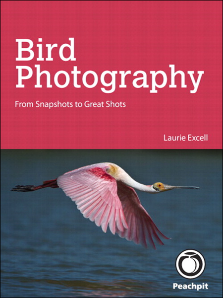 Bird Photography: From Snapshots to Great Shots