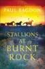 Stallions At Burnt Rock