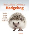 The Guide To Owning A Hedgehog