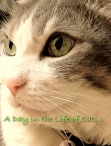 A Day In the Life of Cats Book Review