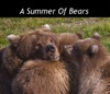 A Summer Of Bears