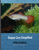 Guppy Care Simplified