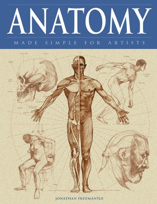Anatomy Made Simple for Artists