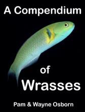 A Compendium Of Wrasses