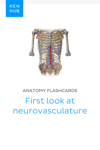 Anatomy flashcards: First look at neurovasculature