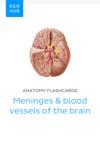 Anatomy flashcards: Meninges & blood vessels of the brain