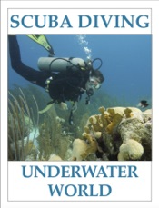 SCUBA DIVING - Underwater World