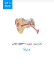 Anatomy flashcards: Ear - Kenhub