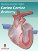 Educational Resources, University of Georgia - Canine Cardiac Anatomy artwork