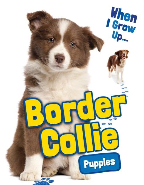 Free Collie Puppies Goldenacresdogs Com