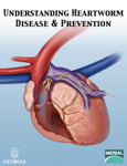 Understanding Heartworm Disease & Prevention