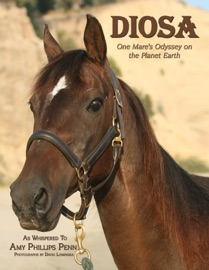 Diosa - Amy Phillips Penn by  Amy Phillips Penn PDF Download