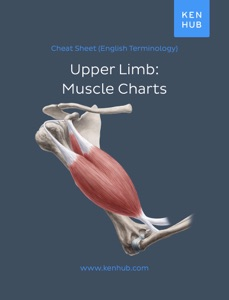 Upper Limb: Muscle Charts Book Cover