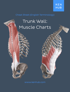 Trunk wall: Muscle Charts Libro Cover