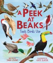 A Peek at Beaks