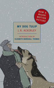 My Dog Tulip Book Cover