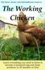 Anna Hess - The Working Chicken ilustraciГіn