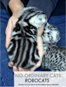 No Ordinary Cats..