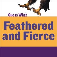 Feathered And Fierce: Bald Eagle