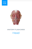 Anatomy flashcards: Head