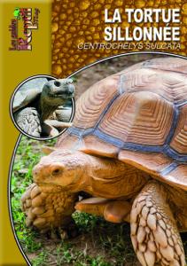 La tortue sillonnée Couverture de livre
