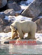 Meet  Polar Bears - A Journey In Svalbard