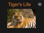 Tiger's Life