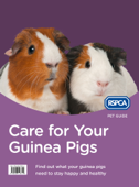 Care for Your Guinea Pigs