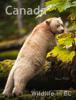 Paul Kolk - Canada Wildlife in BC  artwork