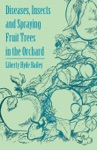 Diseases Insects And Spraying Fruit Trees In The Orchard