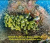 WEST PAPUA & RAJA AMPAT Photo and Diving Expedition 2013