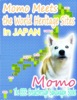 Momo Meets the World Heritage Sites In Japan
