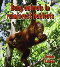 Baby Animals In Rainforest Habitats