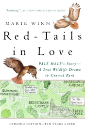 Red-Tails in Love book