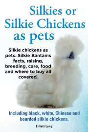 Silkies or Silkie Chickens as pets