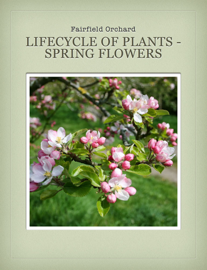Lifecycle of Plants - Spring Flowers