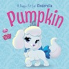 Palace Pets Pumpkin A Puppy Fit For Cinderella