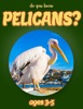 Do You Know Pelicans? (animals for kids 3-5)