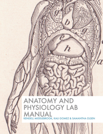 Anatomy and Physiology Lab Manual book