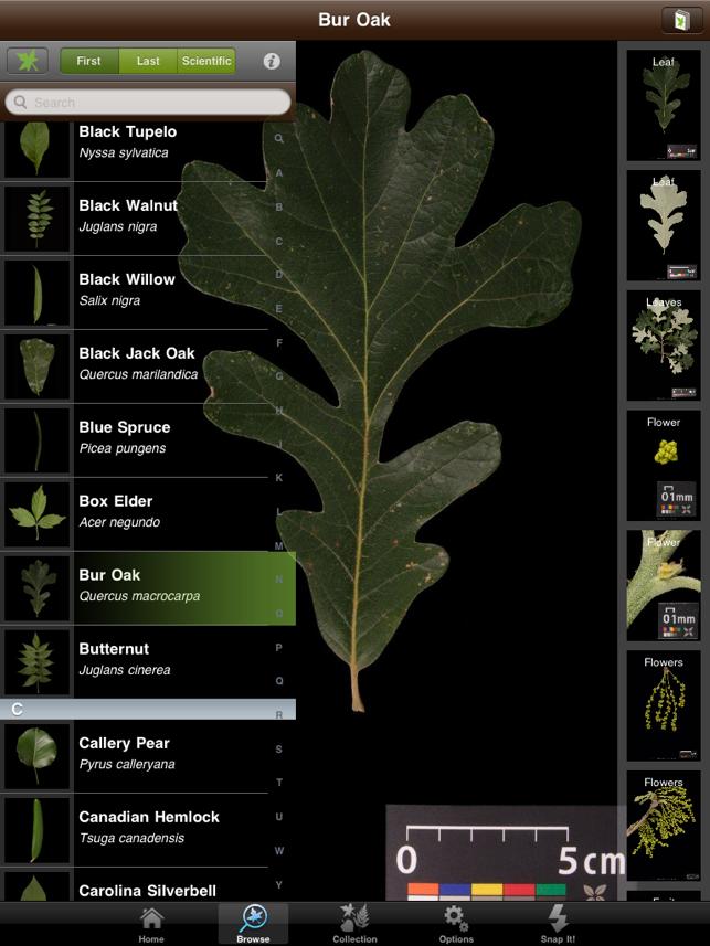 leafsnap