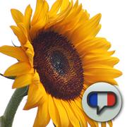 Toddler French: Bonjour!