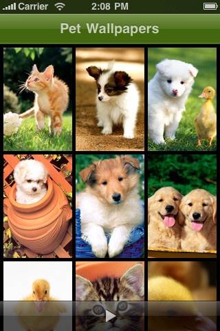 Pet Wallpaper