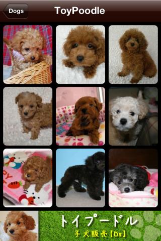 Dog Photobook
