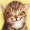 Tap Tap Kitty: Multiplayer Kitty Ball Challenge
