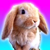 Talking Bunny for iPhone Reviews