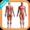 人体解剖/结构/系统[免费版]