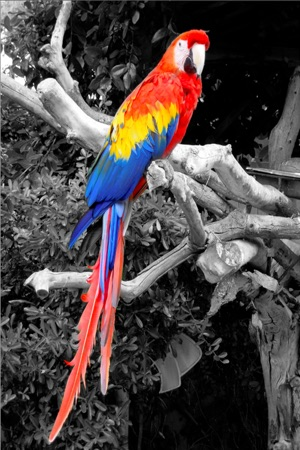 Isplash free photo pic editor for color black white studio photography filter for iphone and ipod touch on the app store
